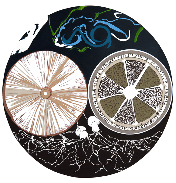 Diatoms and Fungi